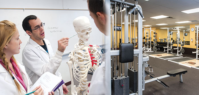 Two Exercise science students looking at Skeleton next to the Kraus Fitness Center