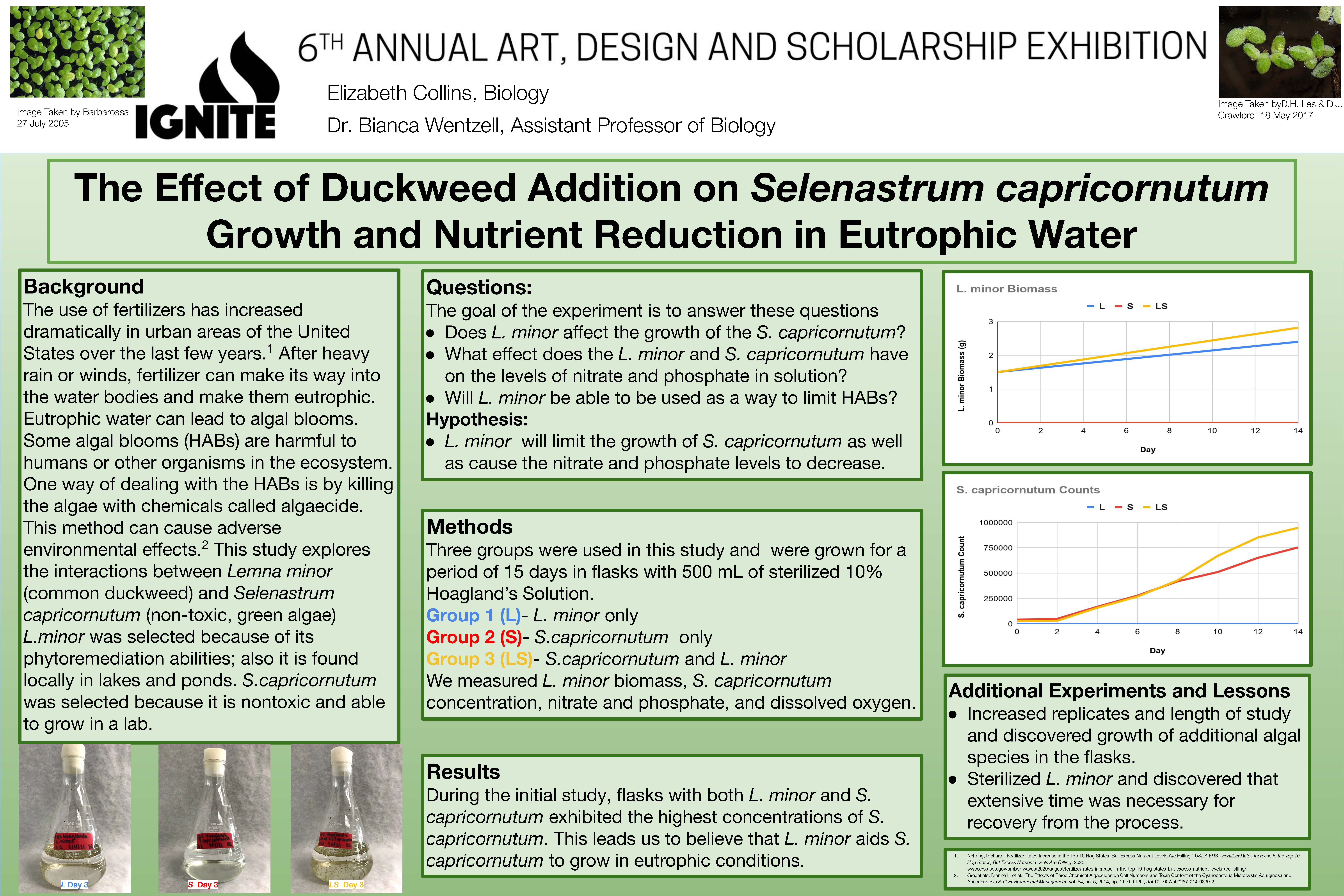 _Collins The Effect of Duckweed Addition on Selenastrum capricornutum Growth and Nutrient Reduction in Eutrophic Water.jpg